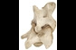 Image of vertebrae