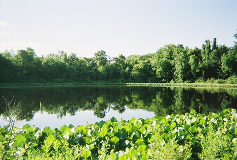 Photo of lake and surrounding trees, grass and plants