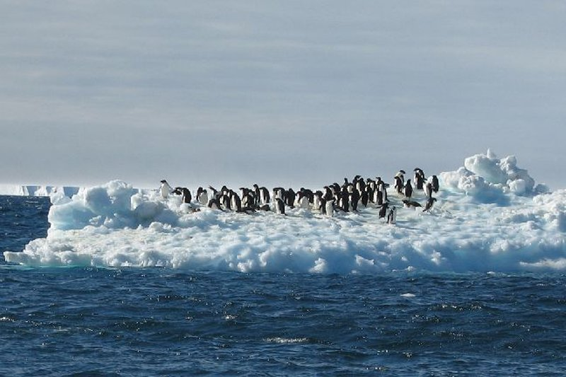 A group of penguins on floating ice