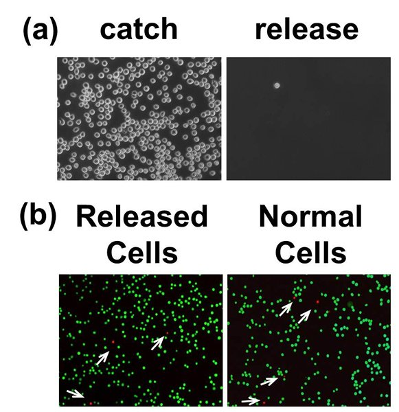 non-invasive, programmable cell catch and release