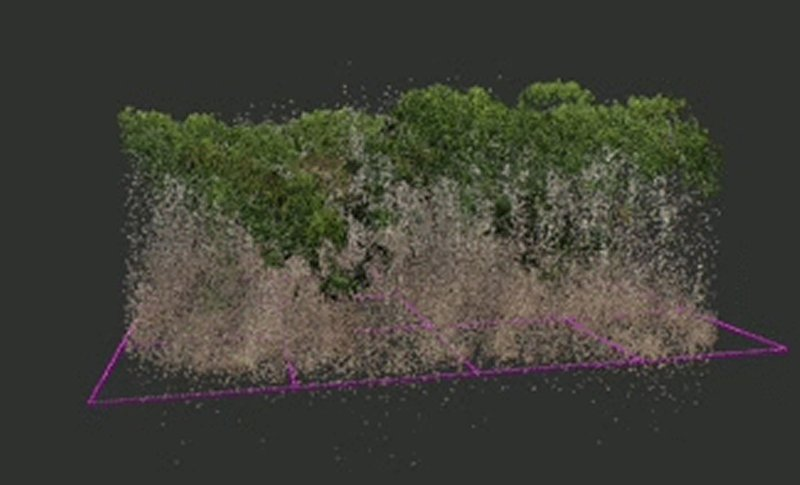 a simulation of a forest at the smithsonian environmental research center