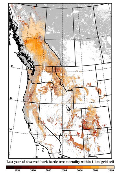 a map of the pacific northwest shows areas affected by bark beetles from 1997 to 2010