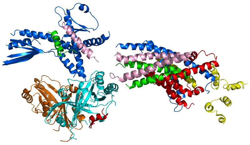 researchers determined an essential structure of a molecular machine that regulates dna