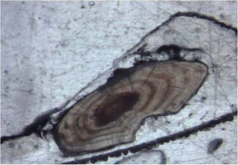 a slice of an eel ear bone