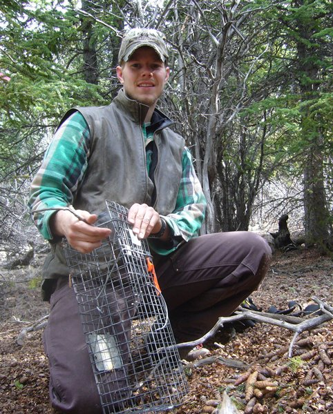 a researcher readies a live-trap to capture a squirrel so it can be weighed