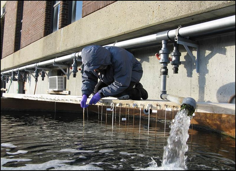 a researcher retrieves samples after immersion in a flowing seawater tank