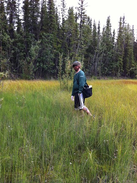 a researcher collects wood frogs near fairbanks, alaska