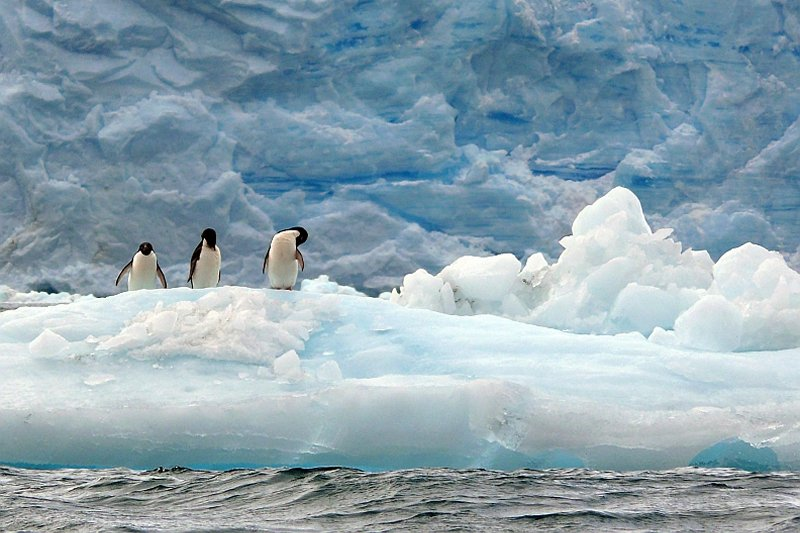 three penguins on pastel blue ice, against darker blue ice cliff